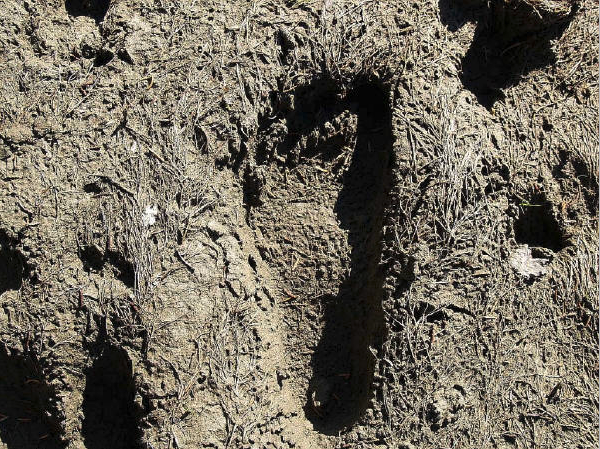 Sasquatch Footprint