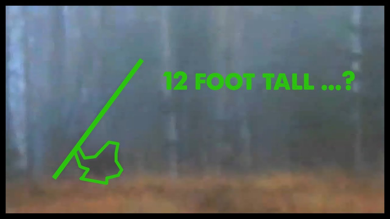 alleged-bigfoot-throws-tree-at-o