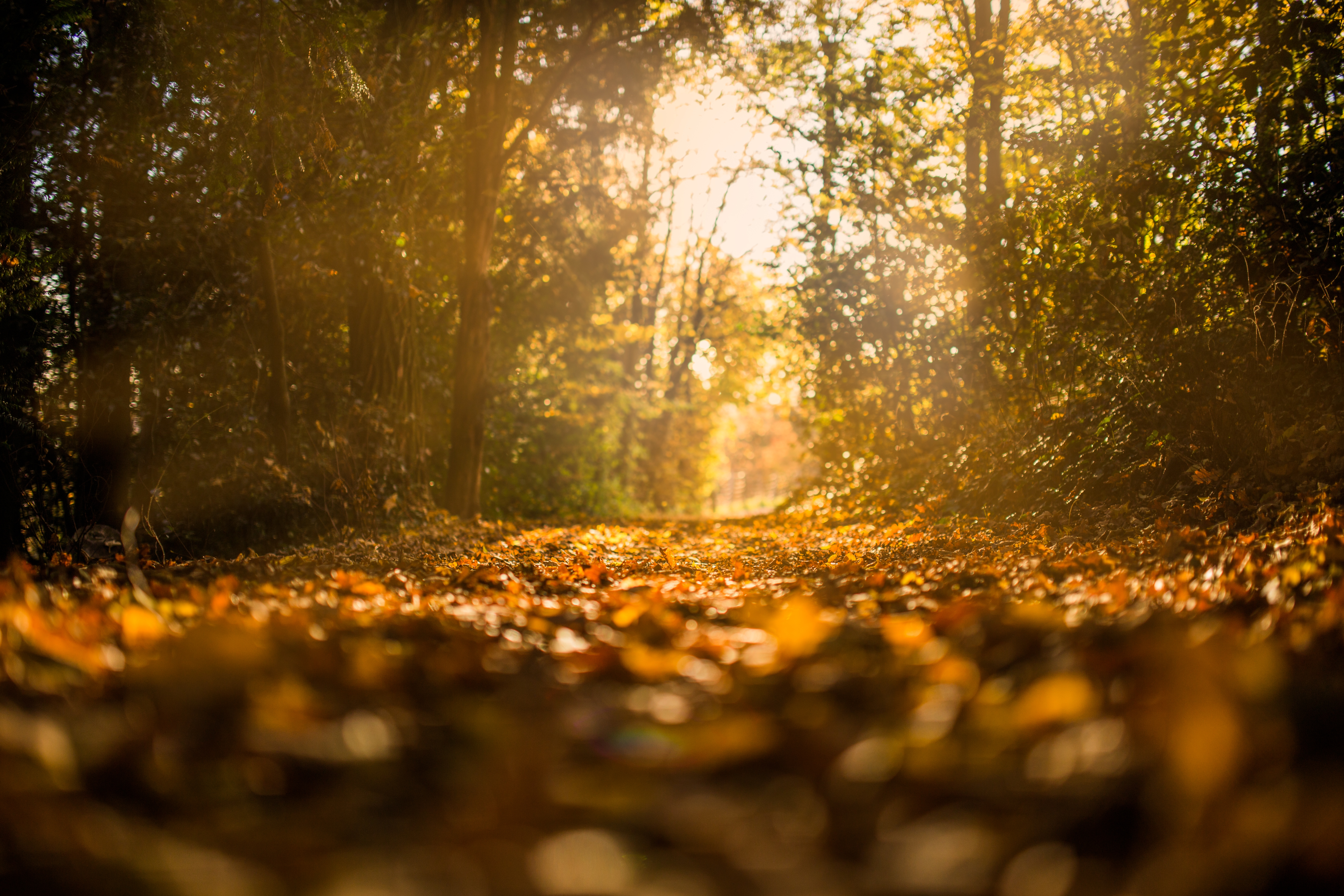 negative-space-forest-in-autumn
