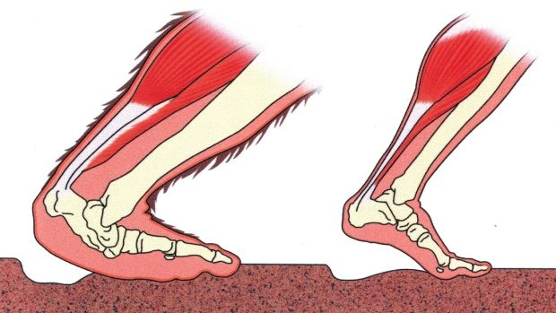 saquatch-foot