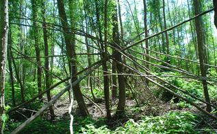tree_orig