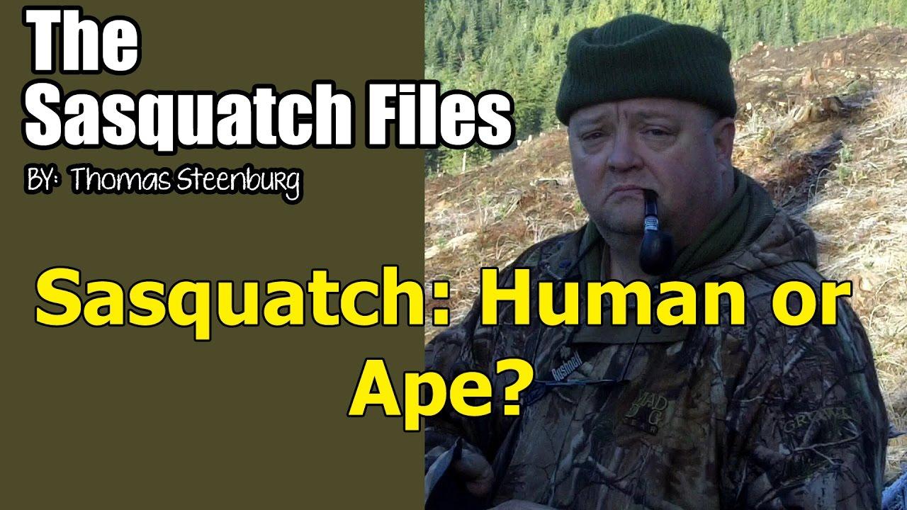 tsf-sasquatch-human-or-ape