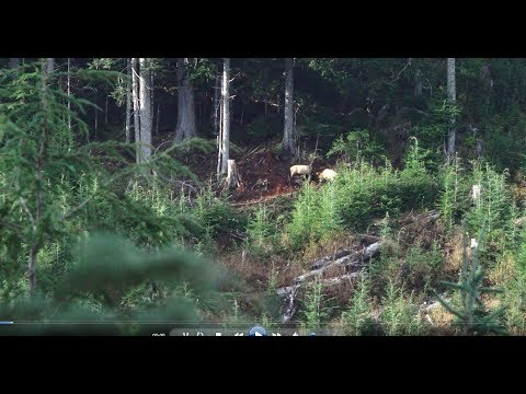 HowToHunt.com: Sasquatch – It Climbed Onto His Machine, With Him In It